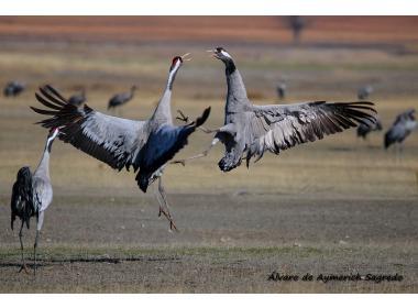 Cómo Preparar Tu Próxima Fotografía De Fauna Para Lograr Imágenes Impresionantes